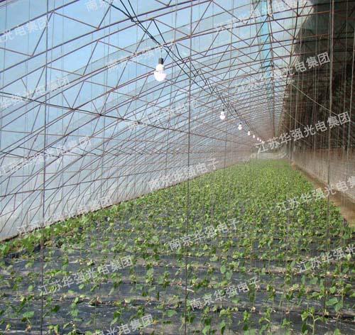 南京市六合区某蔬菜种植基地